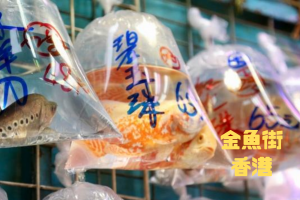金魚街|香港|中国【金運スポット】